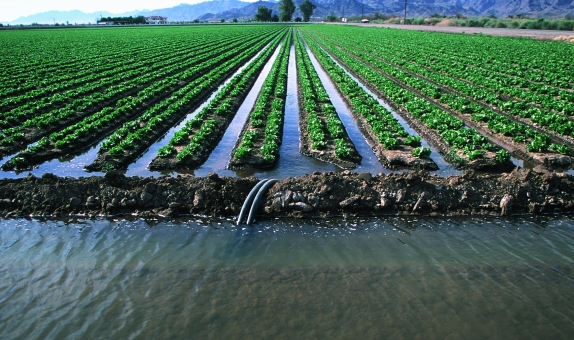 Tarımda Su Kullanımı ve Kaynakların Verimliliği