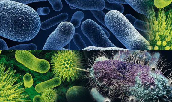 Çevre Sorunlarının Çözümünde Yer Alan Mikroorganizmalar