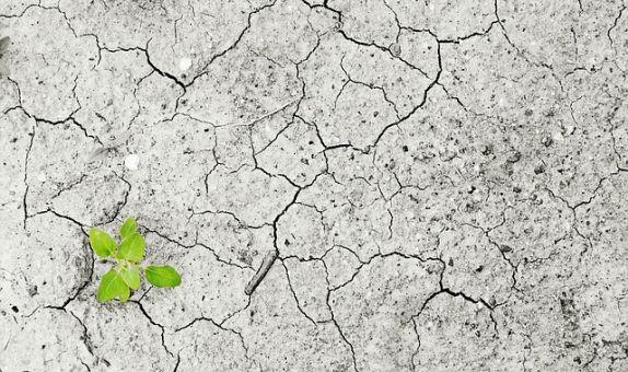 İklim Değişikliğine Uyum Hibe Programına Başvurular Başladı