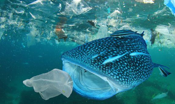"""""""Plastik Kirliliği Krizini Sadece Hesap Verebilirlik Çözebilir"""""""